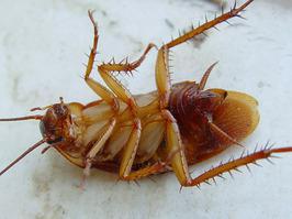 Бизнес на уничтожении насекомых